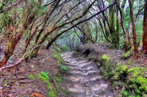 Natur in Teneriffa